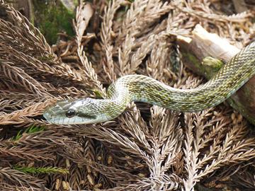 Snake640
