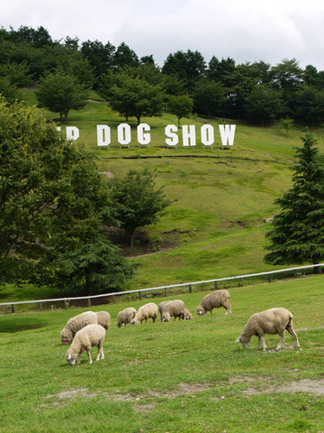 Dogshow01_640