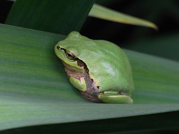 Frog04