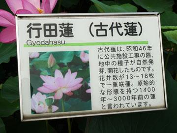 Gyoda_oanel