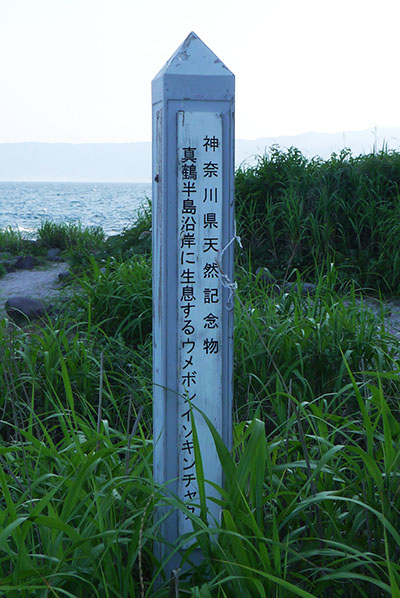 Atami12